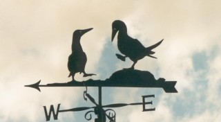 Bluefooted boobies weather vane