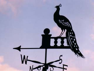 Peacock on Wall weathervane