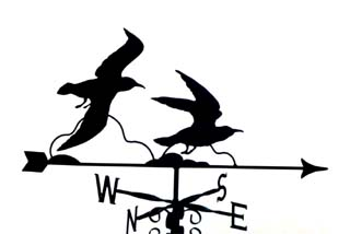 Seagulls weather vane